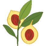 logo-restaurant-le-macis-sainte-hermine152px